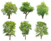 Colección de los árboles aislada en el fondo blanco Imágenes de archivo libres de regalías