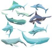 Colección de los animales de mar Foto de archivo