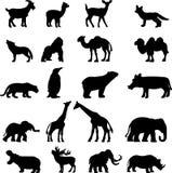 Colección de los animales salvajes Imagen de archivo libre de regalías