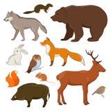 Colección de los animales salvajes de Forrest Imagen de archivo libre de regalías