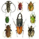 Colección de los escarabajos Fotos de archivo libres de regalías