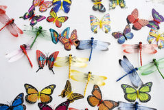 Colección de los insectos Foto de archivo libre de regalías