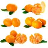 Colección de los mandarines Fotos de archivo libres de regalías