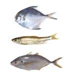 Colección de los pescados imagenes de archivo