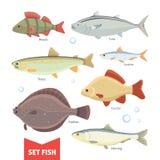 Colección de los pescados de agua dulce aislada en el fondo blanco Fije el ejemplo del vector de los pescados Fotografía de archivo