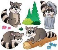 Colección de los racoons de la historieta ilustración del vector