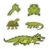 Colección de los reptiles Imagen de archivo libre de regalías