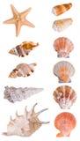 Colección de los Seashells Imagen de archivo libre de regalías