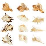 Colección de los Seashells Fotografía de archivo