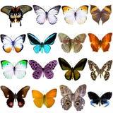 Colección de mariposas tropicales hermosas Imagen de archivo libre de regalías