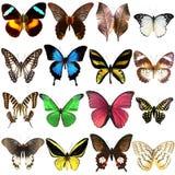 Colección de mariposas tropicales hermosas Fotos de archivo libres de regalías