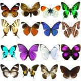 Colección de mariposas tropicales hermosas Fotos de archivo