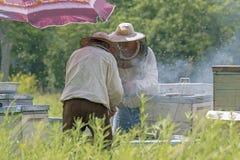 Colección de miel en el colmenar Imágenes de archivo libres de regalías