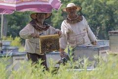 Colección de miel en el colmenar Foto de archivo libre de regalías
