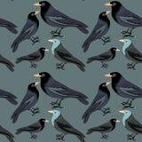Colección de modelo inconsútil de los diversos pájaros negros ejemplo del vector en fondo verde oscuro Fotos de archivo