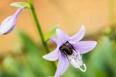Colección de néctar de las flores Imagenes de archivo