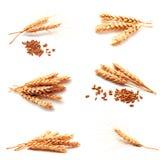 Colección de oídos y de semilla del trigo de las fotos Foto de archivo libre de regalías