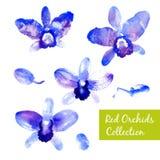 Colección de orquídeas azules de la acuarela Imagenes de archivo