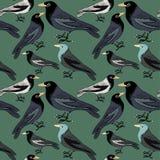Colección de pájaros azules, grises y blancos Modelo inconsútil Ejemplo del vector en fondo verde Imagen de archivo libre de regalías