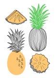 Colección de piña Fruta, pedazo, rebanada de piña Ejemplo exhausto de la mano del vector en el estilo plano de moda moderno para  libre illustration
