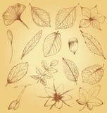 Colección de plantas dibujadas mano Foto de archivo