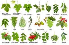 Colección de ramitas frescas naturales con las hojas Fotos de archivo libres de regalías