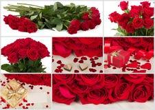 Colección de rosas rojas y de corazón de la tarjeta del día de San Valentín fresca Foto de archivo libre de regalías