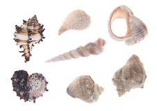 Colección de seashells Fotos de archivo