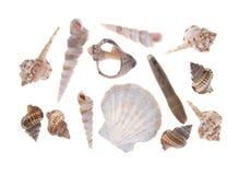 Colección de seashells Imagen de archivo libre de regalías