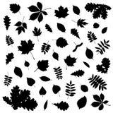 Colección de silueta negra de la hoja en el fondo blanco libre illustration