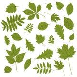 Colección de silueta verde de la hoja en el fondo blanco libre illustration