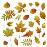 Colección de siluetas coloridas de la hoja del otoño en el fondo blanco ilustración del vector