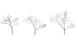 Colección de siluetas de los árboles sin las hojas Ramas stock de ilustración