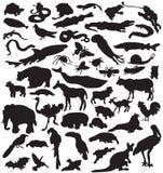 Colección de siluetas de los animales. Fotos de archivo