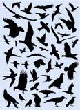 Colección de vector de los pájaros Foto de archivo
