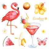Colección de verano con las frutas exóticas, flamenco stock de ilustración