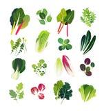Colección de verdes frondosos comunes Imagenes de archivo