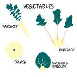 Colección de verduras - colinabo, coles de Bruselas, calabaza, pastinaca del vector Comida estacional ilustración del vector
