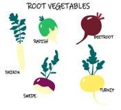 Colecci?n de verduras de la ra?z-cosecha - nabo del vector; colinabo; daikon; remolachas; r?bano Comida estacional stock de ilustración