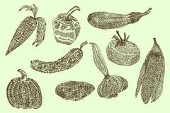 Colección de verduras a mano, ejemplo del vector en estilo del vintage Foto de archivo libre de regalías