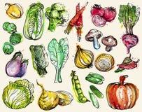 Colección de verduras a mano de la acuarela stock de ilustración