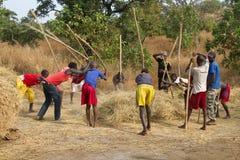 Colección del cereal en África Imagen de archivo libre de regalías