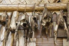 Colección del cráneo de los ciervos en hogar tribal foto de archivo