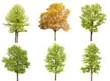 Colección del grupo del árbol aislada en el fondo blanco Imagenes de archivo