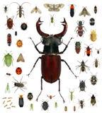 Colección del insecto foto de archivo