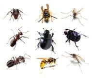 Colección del insecto Imagenes de archivo