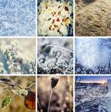 Colección del invierno Imagen de archivo