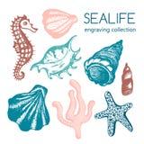 Colección del mar con las conchas marinas, estrellas de mar, coral, seahorse Imágenes de archivo libres de regalías