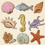 Colección del mar. Ejemplo dibujado mano original Imagen de archivo libre de regalías