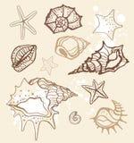 Colección del mar. Ilustración drenada mano Imagen de archivo libre de regalías